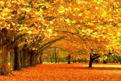 Toamna eu număr iubirea în frunze